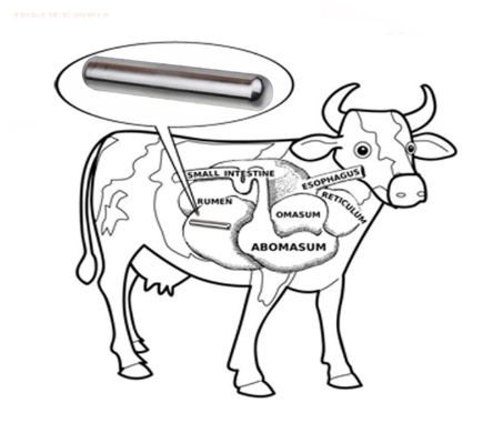 Cheap Price AlNiCo Cow Magnet For Cow